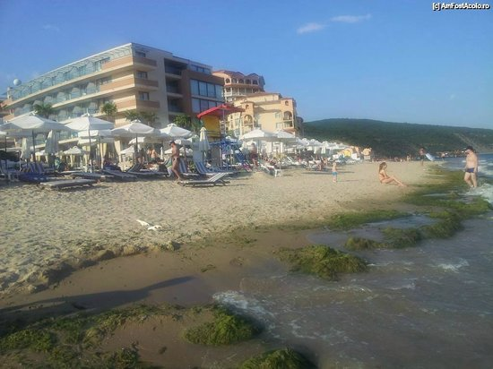 Elenite, Bulgaria: A lots of algae on the beach