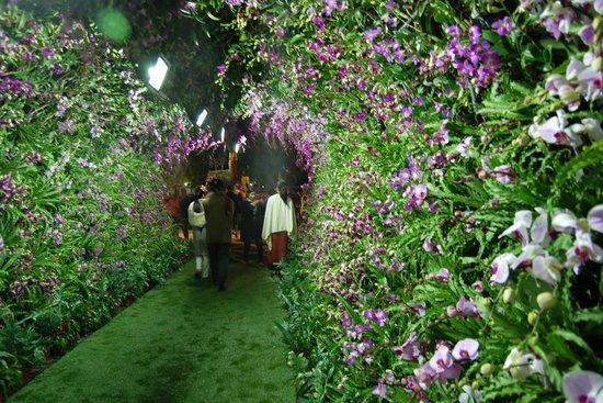 Nak Nakara : Chiang Rai flower festival