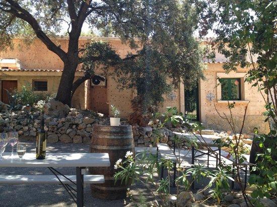 Mallorca Driving - Tour: Winery
