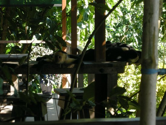 Lookout Inn Lodge : CARABLANCA