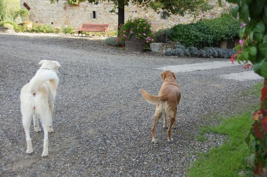 Borgo Argenina: The Welcoming Committee