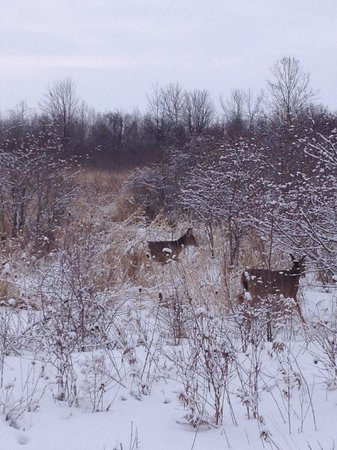 Maumee Bay Lodge and Conference Center: Deer