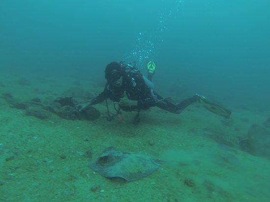Galapagos Underwater: Jimbo
