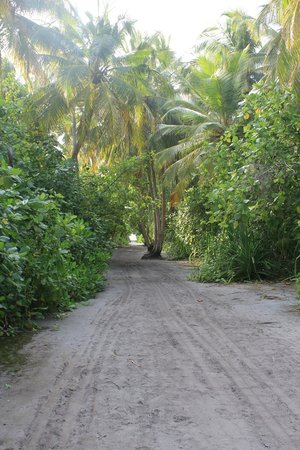 Kuri Inn : sentiero per la spiaggia