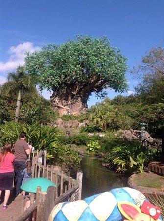 Disney's Animal Kingdom: Animal Kingdom