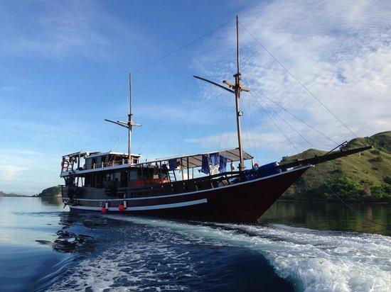 Divine Diving : Weta Molas