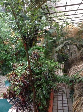 Hotel Maya Tulipanes: View of lobby in the rain