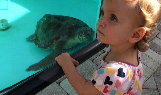 Loggerhead Marinelife Center: Loggerhead turtle