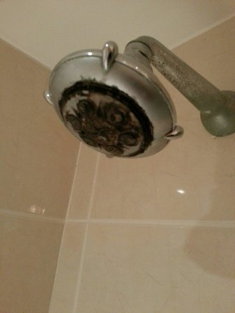 Royal Hotel Scarborough: Shower head in room 350!!!!