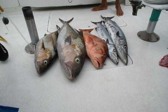 Barracuda Marina : Dagens fangst