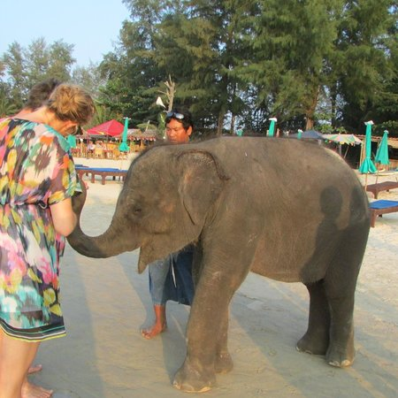 Best Western Premier Bangtao Beach Resort & Spa: Baby elephant brought every evening to the beach
