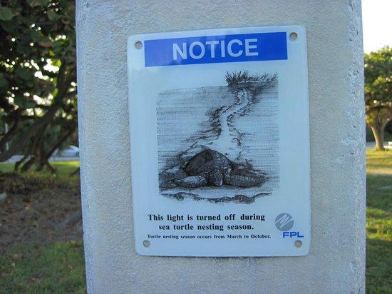 Bal Harbour, FL: осторожно черепахи