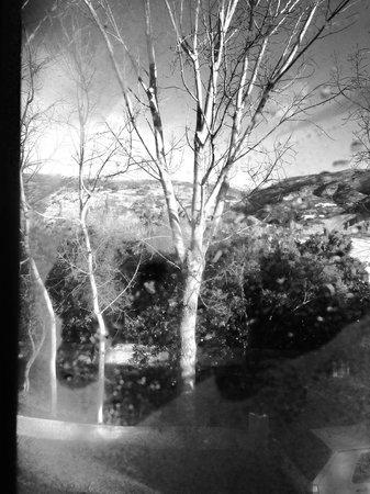 Taray Botanico: Vista desde la ventana de la habitación