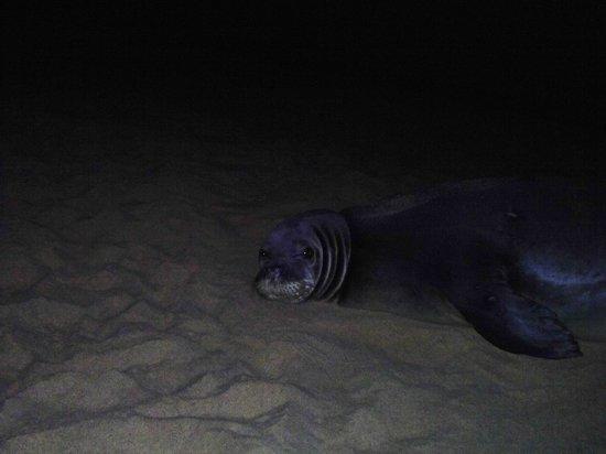 Poipu Beach Park: Rare Monk Seal