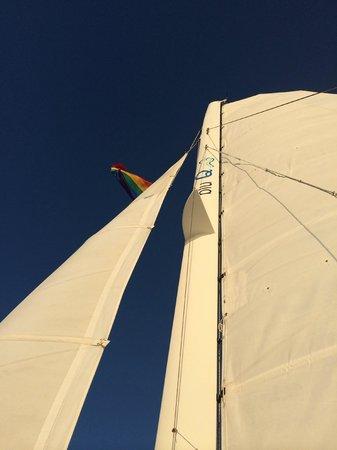 Blu Q catamaran sails up