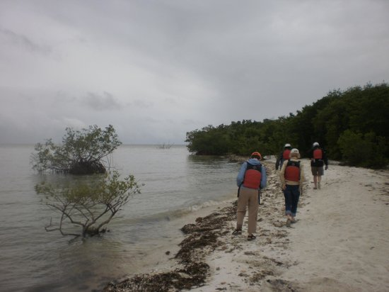 Everglades Area Tours: A break from paddling