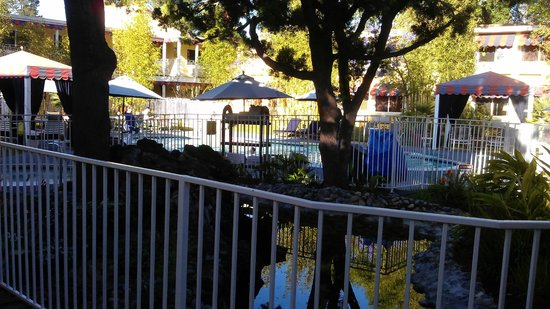 Wild Palms Hotel - a Joie de Vivre Hotel: Poolside landscaping