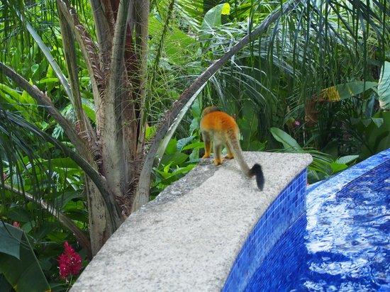 El Paseo del Mar: monkeys at the pool