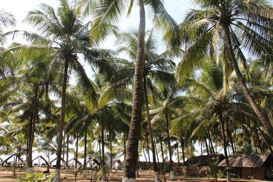 Kadappuram Beach resort: La pace della natura