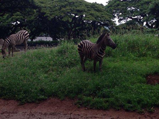 Honolulu Zoo: Beautiful animals!