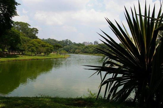 Parc d'Ibirapuera : Lac et agave
