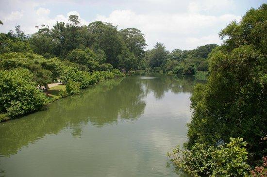 Parc d'Ibirapuera : Lac