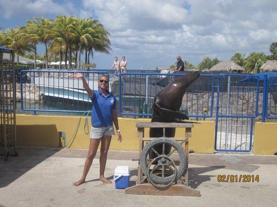 Dolphin Academy Curacao: sea lion @ Curacao