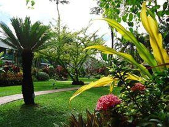 Cobblers Cove: Gardens
