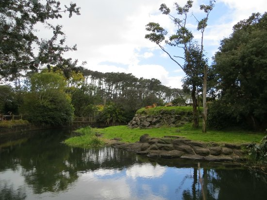 Auckland Zoo : One of the beautiful exhibits