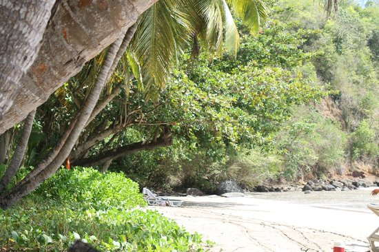 La Sagesse Hotel, Restaurant & Beach Bar: Sitting under the palms in a longe chair- ocean side.