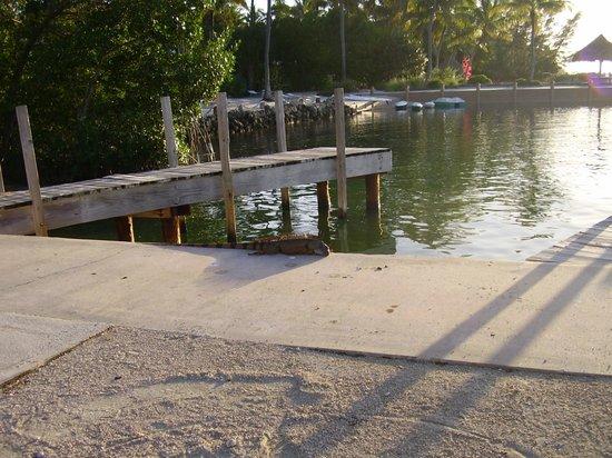 Rock Reef Resort: Boat mooring