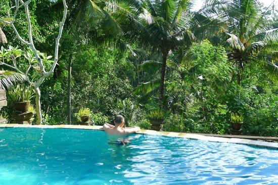 """Bucu View Bungalows: La piscine donnant sur la """"jungle"""""""