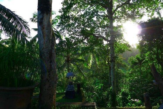 Bucu View Bungalows: Vue depuis la piscine