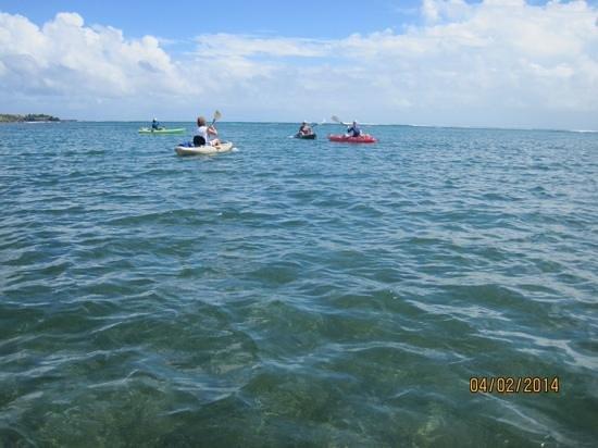 Conservation Kayak: at sea!