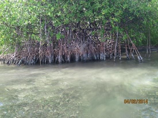 Conservation Kayak: mangrove