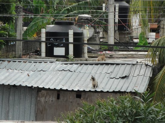 IslaMar Vacation Villas: two dogs running across roof tops
