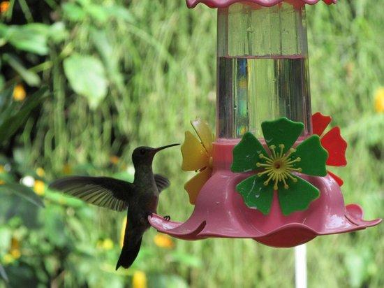 Jardin de los Picaflores: agua con azucar! por si no alcanzan las flores del jardin