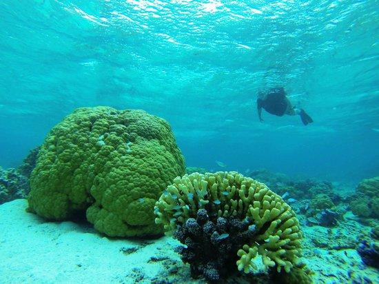 Arrecife del descubrimiento: Great visibility
