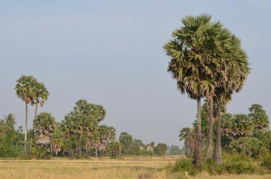 Ganesha Kampot Eco Guesthouse and More : Rice field around Ganesha
