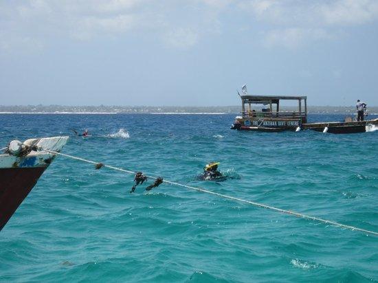 Dive Point Zanzibar: dive point 2