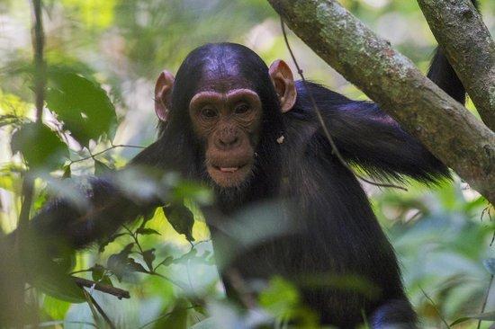 Primate Lodge Kibale: your neighbors....