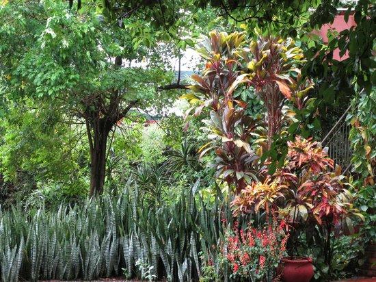 Marcopolo Inn Iguazu : mas plantas