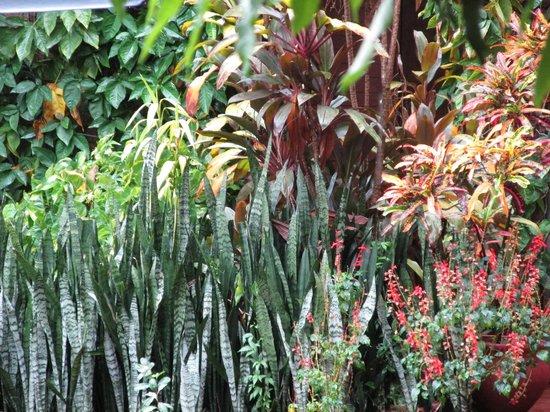 Marcopolo Inn Iguazu : plantas!!1