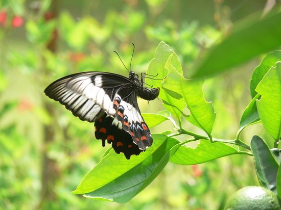 Cave Rock Cottages : butterflies everywhere