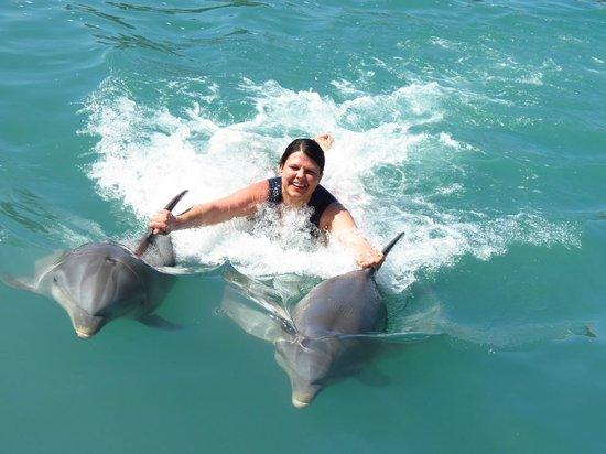 Dolphin Cove : 1/21/14