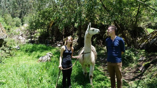 Llama Pack - Day Tours : With Guapo, one of the llamas