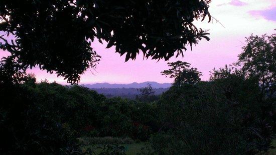 Finca Cafetera El Balso : Blick von der Terrasse