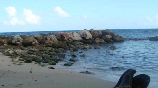 DOLPHIN COVE, JAMAICA