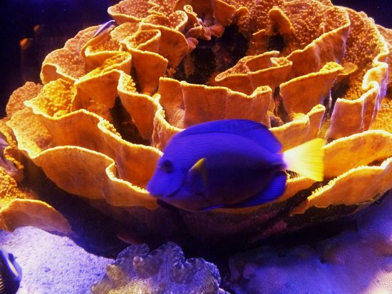 Underwater Observatory Marine Park : буйство красок