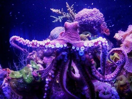 Underwater Observatory Marine Park : осьминог